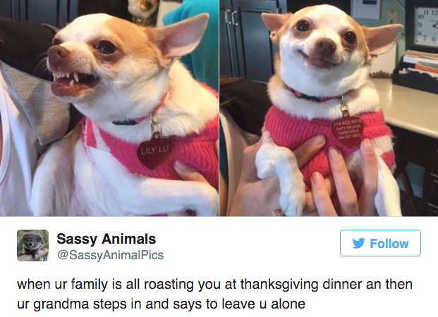 31 Funny Thanksgiving Tweets You'll Be Thankful You SawToday