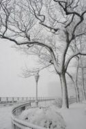snow bklyn hts