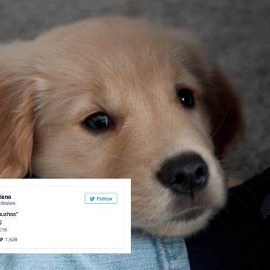 16 Best Dog Tweets You'll Read From 2015
