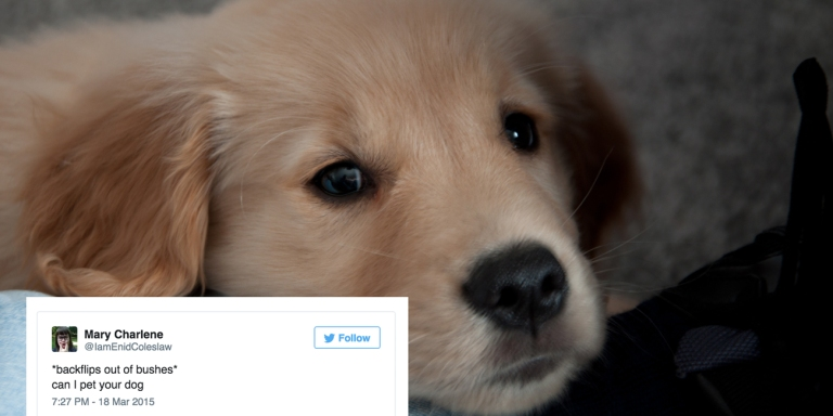 16 Best Dog Tweets You'll Read From2015