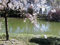 bbg 3 tree at japanese