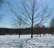 prospect park winter