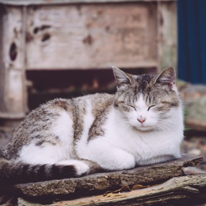 10 Reasons To Seriously Consider Adopting An Older Cat