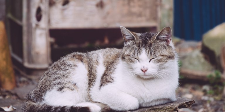 10 Reasons To Seriously Consider Adopting An OlderCat