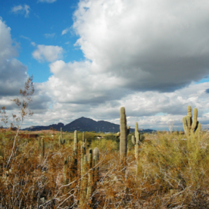 9 Fun Things That Will Make Your Trip To Phoenix Unforgettable
