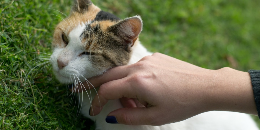 """12 Reasons Women Who Love Cats Are Usually """"Wife-Material"""""""