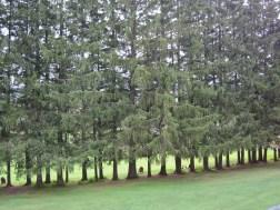 BL woods