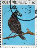 blackbird stamp cuba