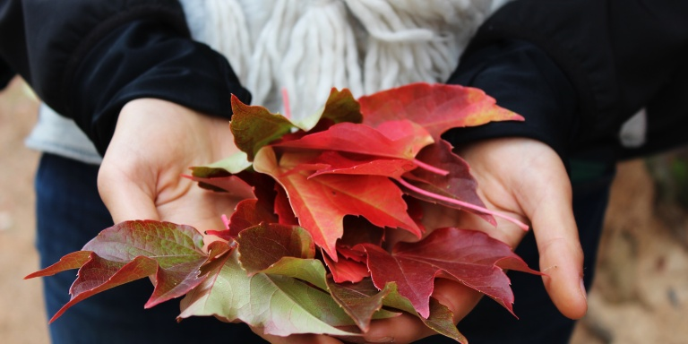 Changing The Seasons Of YourLife