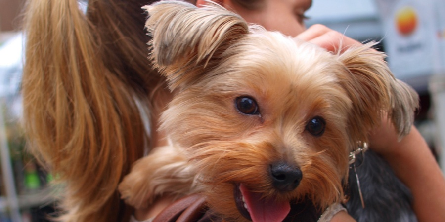 35 Reasons Why Your Dog Is Better Than A Boyfriend Will EverBe