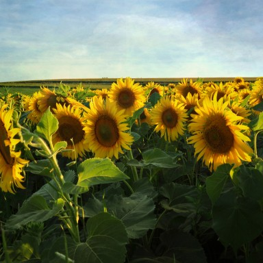 These Are Some Definitive Reasons Why You Should Stop Bashing The Great State Of Iowa