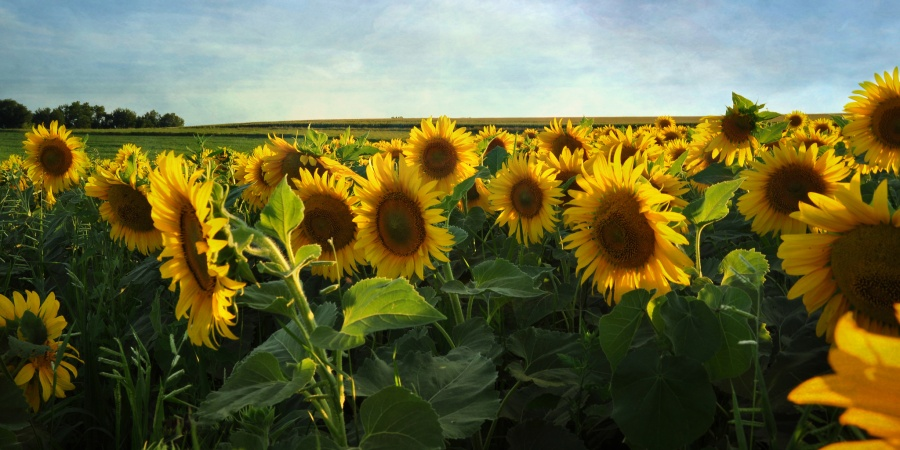 These Are Some Definitive Reasons Why You Should Stop Bashing The Great State OfIowa