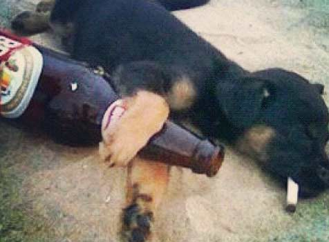 33 Dogs That Totally Understand How You Feel AboutMonday