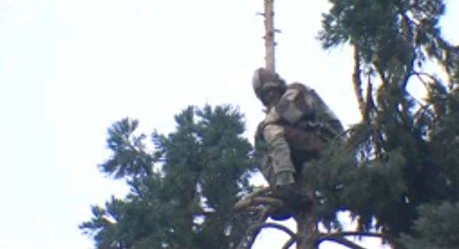 Everything You Need To Know About The #ManInTree Viral Sensation Who's Been Holding Seattle 'Hostage'