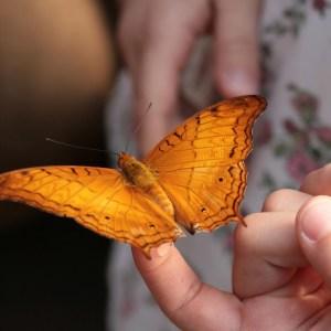 I Will Listen To The Butterflies