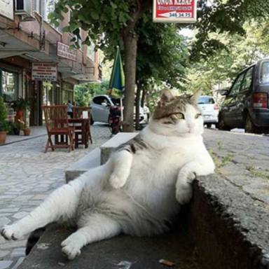 36 Super-Chill Animals Being More Relaxed Than You Have Ever Been