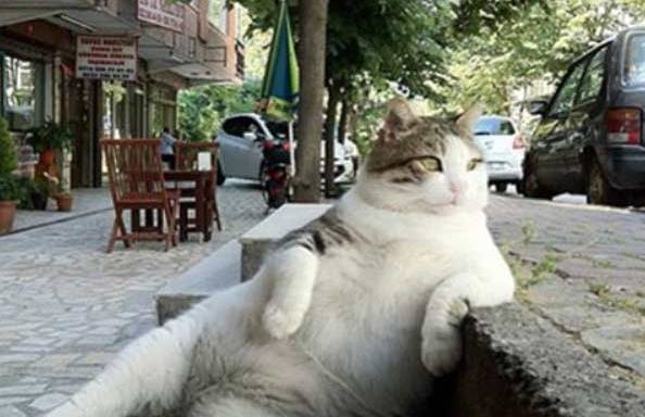 36 Super-Chill Animals Being More Relaxed Than You Have EverBeen