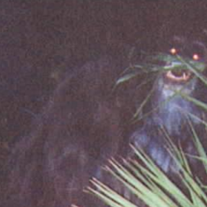 Here Are The Creepiest Monster Legends From Every State In The Country