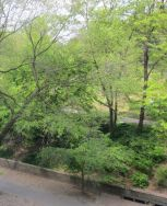 Central Park from Mount Sinai