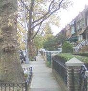 Crown Street fall