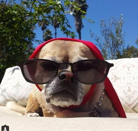44 Obnoxious Photos Of 'Rich Dogs' That Have A Better Life ThanYou