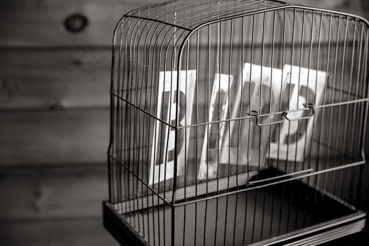 black-and-white-bird-birdcage-cage-medium