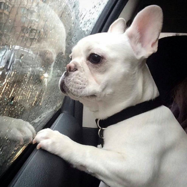 45 Puppies Who Hate Mondays As Much (If Not More) Than You Do