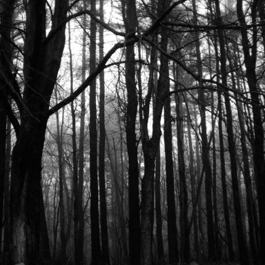 Horror In The Woods: 24 SUPER-Creepy Real-Life Stories Of Camping Gone Wrong