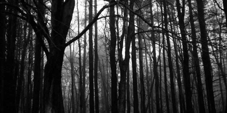Horror In The Woods: 24 SUPER-Creepy Real-Life Stories Of Camping GoneWrong
