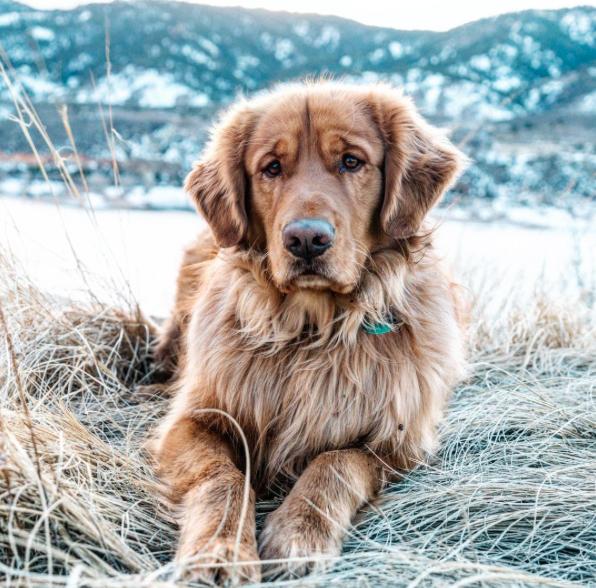 Aspen the Mountain Pup