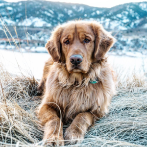 This Adorable Dog Travels The World With His People And It's Freakin' Awesome