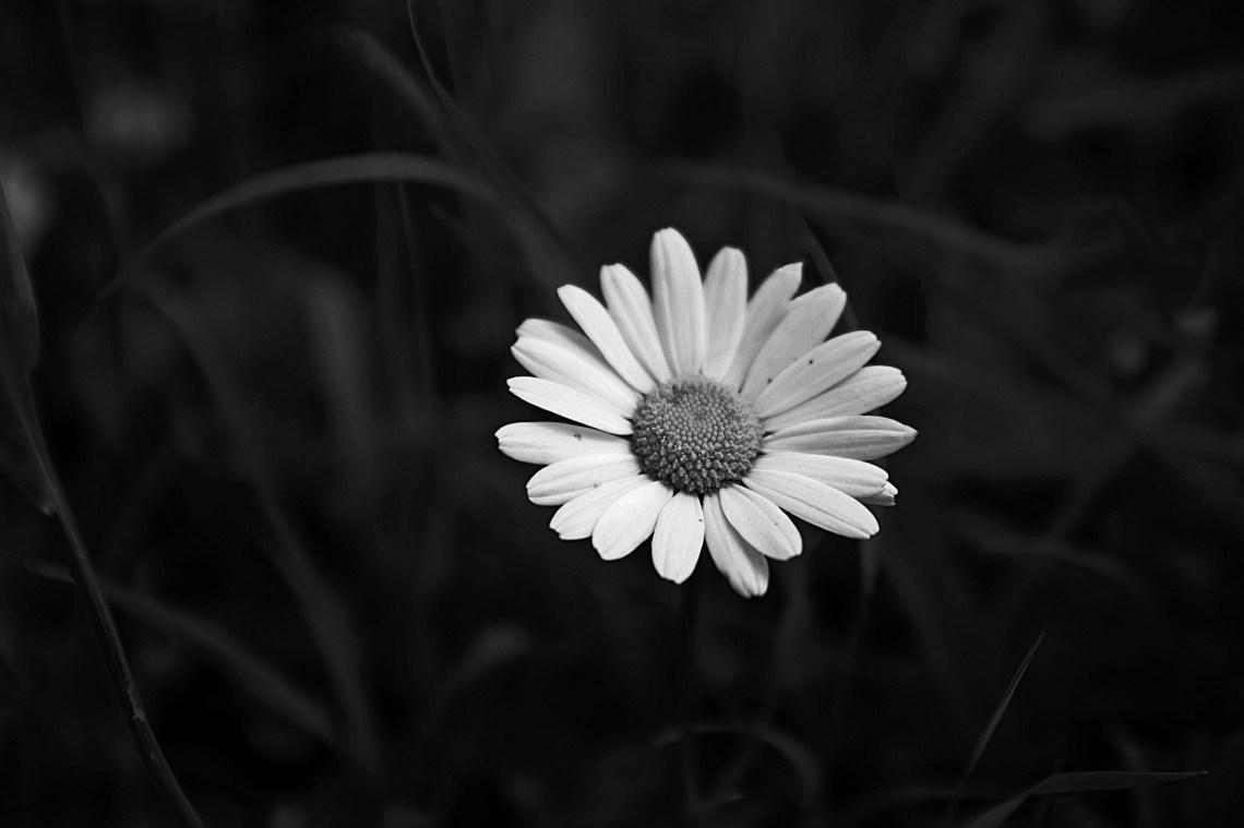 Flickr / Hannah Luisa