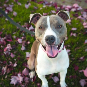 10 Reasons Adopting A Shelter Dog Will Actually Rescue You