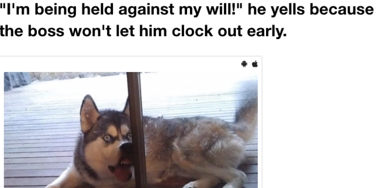 These 15 Hilarious Animals Are Fucking #DONE With This Day And They'll Make You LOL