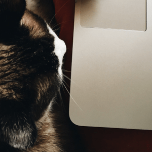 Not Everyone Can Be A Grumpy Cat (But We Can All Die Trying)