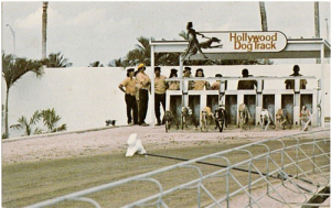 starting_gate_hollywood_dog_track_hollywood_florida_vintagecard_c1a4d980