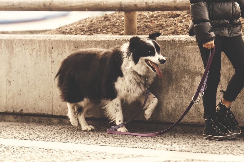 10-life-lessons-you-can-only-learn-while-walking-your-dog