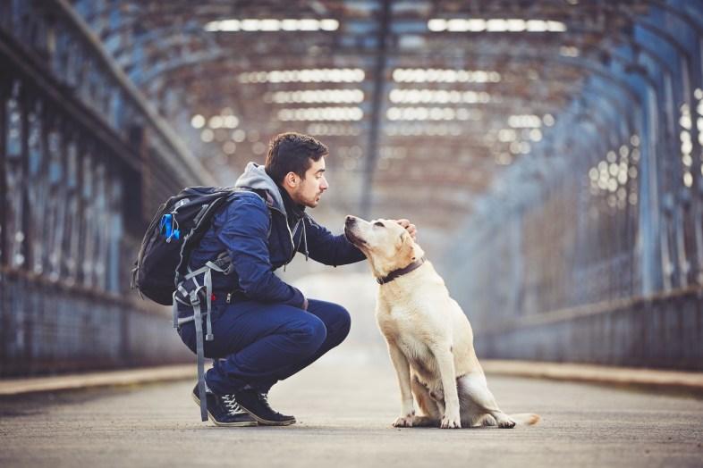 Man walking with his yellow labrador retriever on the old bridge