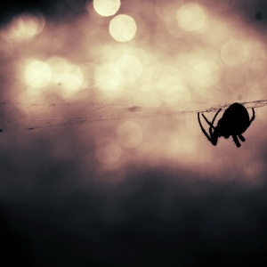 I've Never Liked Spiders But After This Halloween, I'm Officially Terrified Of Them