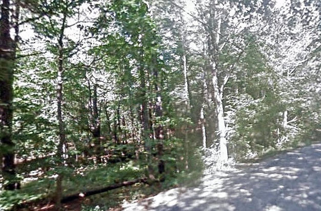 macdowell-trees-1
