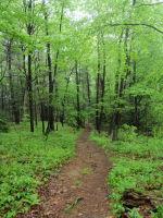 nh-woods