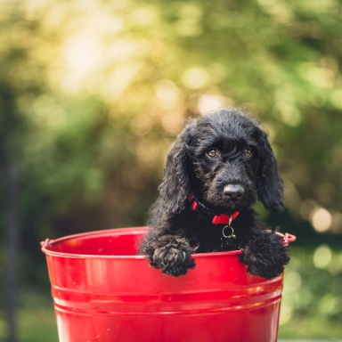 5 Reasons You Need To Adopt A Dog As Soon As Possible