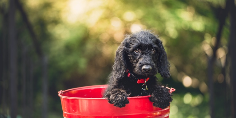 5 Reasons You Need To Adopt A Dog As Soon AsPossible