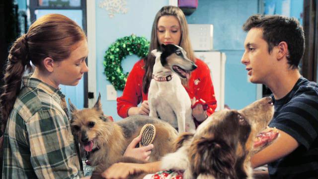 12 Dogs Days Till Christmas