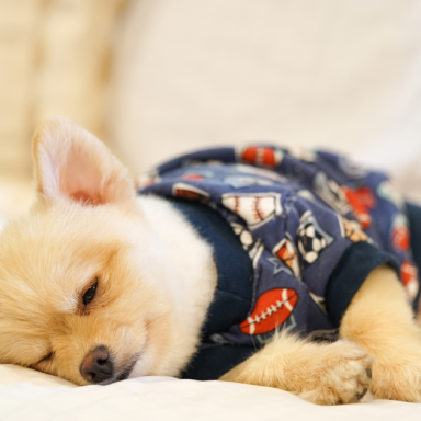 10 Essential Dog Products You Didn't Even Know Existed