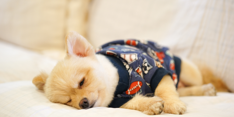10 Essential Dog Products You Didn't Even KnowExisted