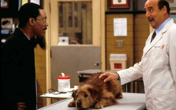 7 Things You Shouldn't Say At The Veterinarian's Office