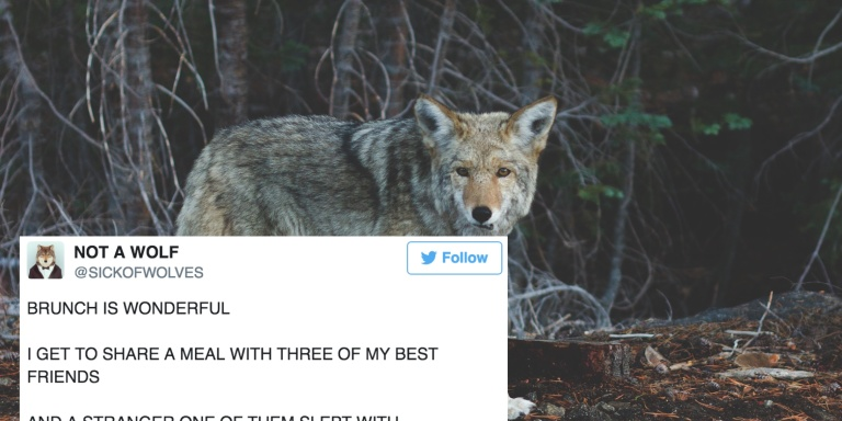 17 Funny Tweets From This Hilarious Twitter Account Pretending To Be A Wolf In A HumanWorld