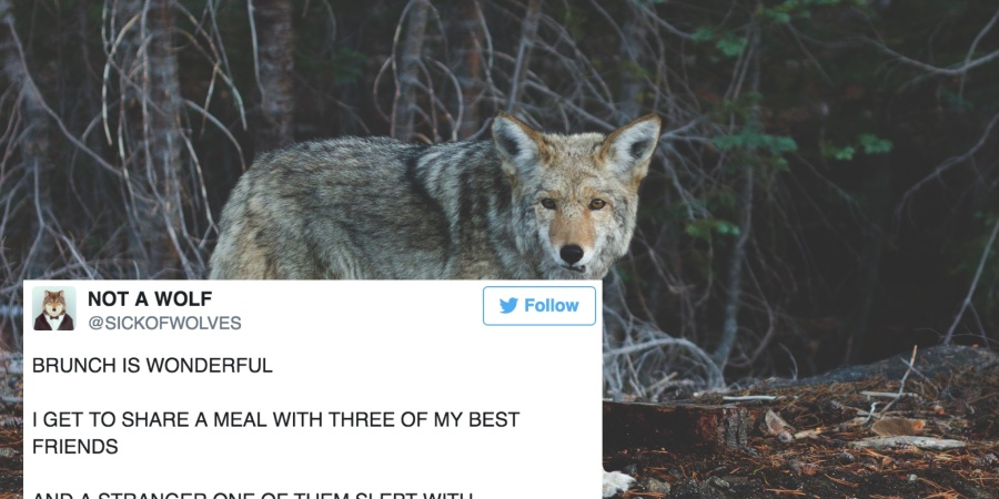 17 Funny Tweets From This Hilarious Twitter Account Pretending To Be A Wolf In A Human World