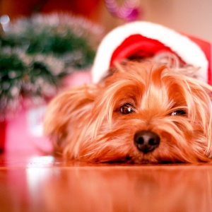 5 Ways To Pamper Your Pet For The Holidays (Because They Deserve It)